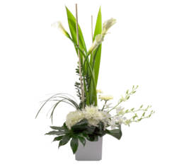 Arrangement Colombe blanche