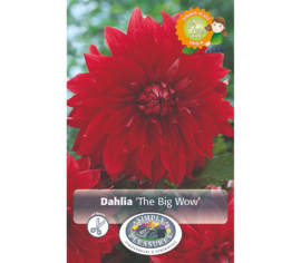 Dahlia The Big Wow (Dinnerplate) (Paquet de 2)