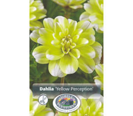 Dahlia Yellow Perception (Décoratif) (1 unité)
