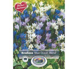 Brodiaea Blue Ocean Blend (Mélange Perfect Partners) (Paquet de 50) (taille : 5 cm et +)