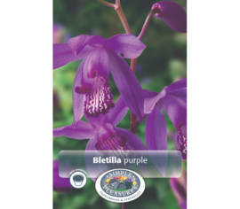 Bletilla Purple (Paquet de 2)