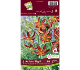 Lys Arabian Night (Abricot) (Novelty) (1 unité)