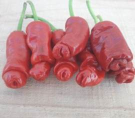 Piment Peter Pepper rouge