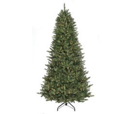 Sapin Royal Étroit 7,5' x 52