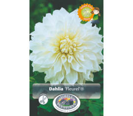 Dahlia Fleurel (Dinnerplate) (1 bulbe)