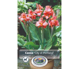 Canna City of Portland (1 unité)