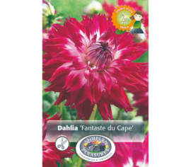 Dahlia Fantaste du Cape (Dinnerplate) (Paquet de 2 bulbes)