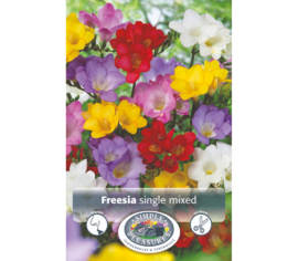 Freesia Mixed single (Paquet de 10 bulbes) (taille : 6/7 cm)