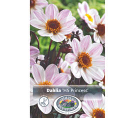 Dahlia Happy Single Princess (Feuillage foncé) (1 bulbe)