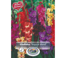 Glaïeul Tropical Blend (Mélange Perfect Partners) (Paquet de 25 bulbes) (taille : 12/14 cm)