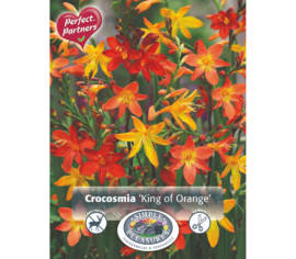 Crocosmia King of Orange (Mélange Perfect Partners) (Paquet de 20 bulbes) (taille : 8/10 cm)