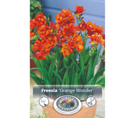 Freesia Orange Wonder (Paquet de 10 bulbes) (taille : 5 cm et +)