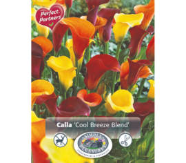 Calla Cool Breeze Blend (Mélange Perfect Partners) (Paquet de 3 bulbes) (taille : 12/14 cm)