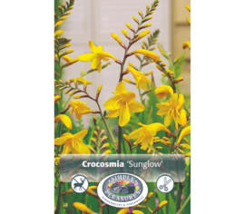 Crocosmia Sunglow (Paquet de 8 bulbes) (taille : 8/10 cm)