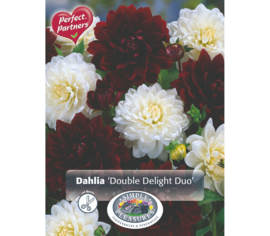 Dahlia Double Delight Duo (Mélange Perfect Partners) (Paquet de 2 bulbes)