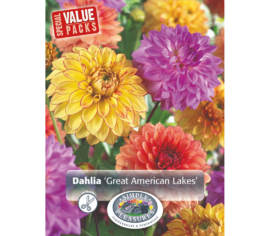 Dahlia Great American Lakes Mixed (Emballage économique) (Paquet de 3 bulbes)