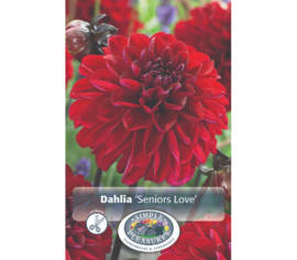 Dahlia Seniors Love (Décoratif) (1 bulbe)