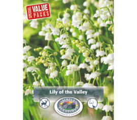Convallaria Lily of the Valley (Emballage économique) (Paquet de 10 bulbes)