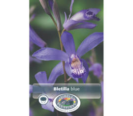 Bletilla Blue (Paquet de 2 bulbes)