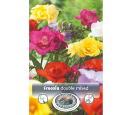 Freesia Mixed double (Paquet de 10 bulbes) (taille : 6/7 cm)