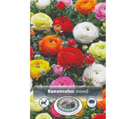 Ranunculus Yellow (Bag of 10 bulbs) (size : 8 cm and up)