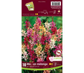 Ixia Hybrids Mixed (Paquet de 10 bulbes)