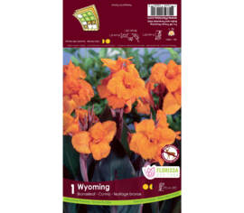 Canna Wyoming (Orange) (Feuillage Bronze) (1 bulbe)