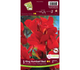 Canna Red King Humbert (Rouge cardinal) (Feuillage Bronze) (1 bulbe)