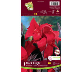 Canna Black Knight (Rouge) (Feuillage Bronze) (1 bulbe)