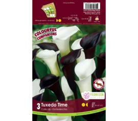 Calla Mix - Tuxedo Time (Calla Noir et Blanc) (Paquet de 3 bulbes) (Colourful Companions)