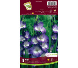 Glaïeul Nori (Mauve et blanc) (Novelty Dutch) (Paquet de 8 bulbes)