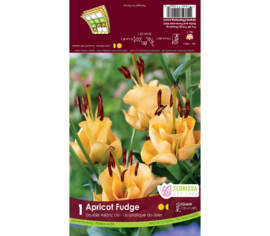 Lys Apricot Fudge (Abricot) (Novelty Double) (1 bulbe)