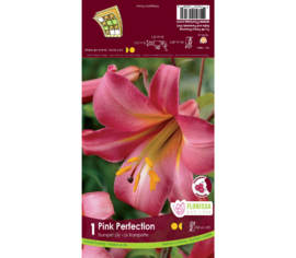 Lys Pink Perfection (Rose) (Trompette) (1 bulbe)