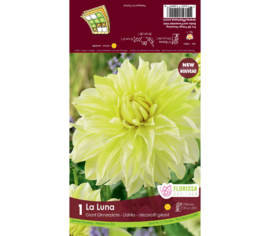 Dahlia La Luna (Dinnerplate) (1 bulbe)