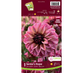 Dahlia Senior's Hope (Décoratif) (1 bulbe)