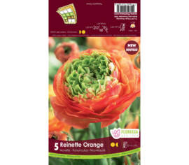 Renoncule Reinette Orange (Centre vert) (Paquet de 5 bulbes)