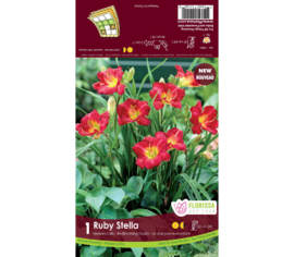 Hemerocallis Ruby Stella (500 Blooms Club) (1 bulbe)