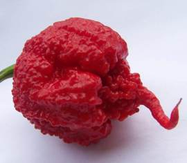 Piment Carolina Reaper Rouge