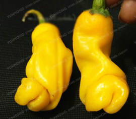 Piment Peter Pepper jaune